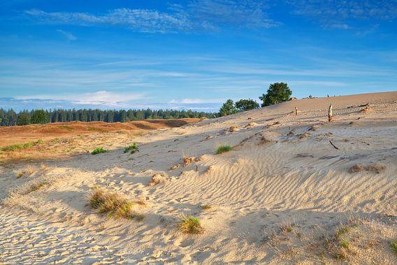 Dutch desert II