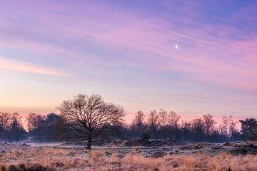Bunter violetter Sonnenaufgang bei loonse & drunense duinen, Die Niederlande von Enrique De Corral