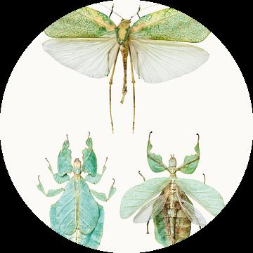Rariteitenkabinet_Insecten_07   van Marielle Leenders
