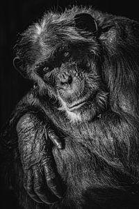 Aap  in zwart wit van