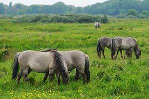 Paarden op Lentevreugd