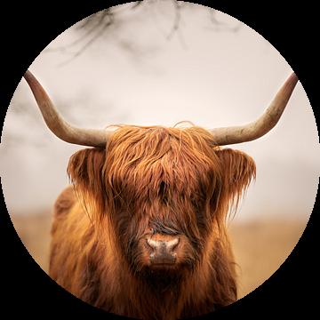 Schotse Hooglander van GoWildGoNaturepictures