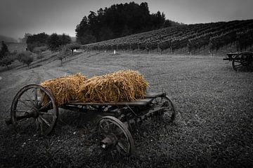 alter Erntehelfer in einer wunderschönen Weinlandschaft. von Gunter Nuyts