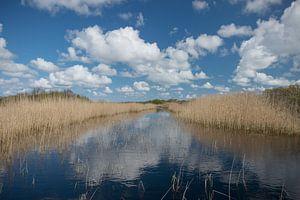 Fantastische weerspiegeling van wolken tussen het riet van Patrick Verhoef