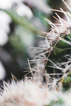 Cacti van Daniël Westrik