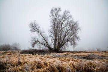 Einsamer Baum von Diane Cruysberghs