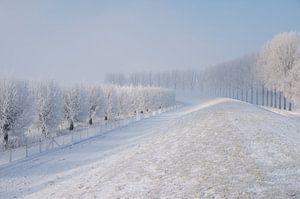 Dijk met bomenrij in winterlandschap