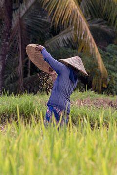 Ernte des Reises auf dem Reisfeld von Ubud, Bali von Jeroen Langeveld, MrLangeveldPhoto