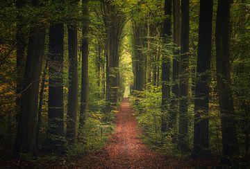Herfst groen van Joris Pannemans - Loris Photography