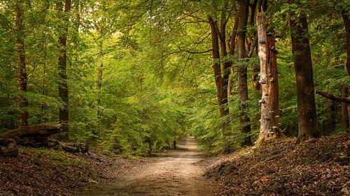 Lenteochtend in het Speulderbos van Toon van den Einde