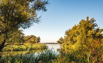 Doorkijkje in de Biesbosch van Ruud Morijn
