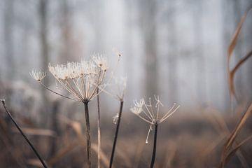 Naturtöne im Wald von Petra Brouwer