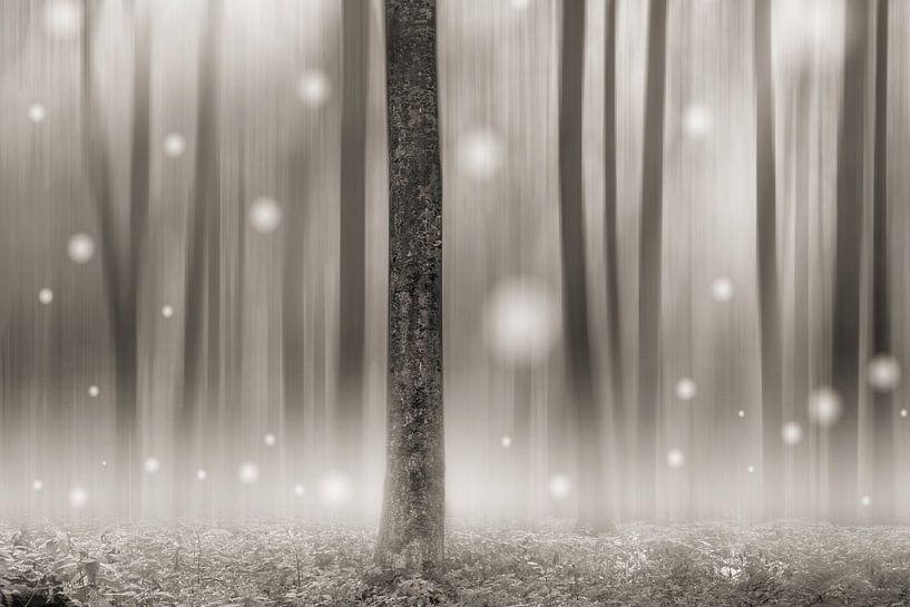 Elf Forest van Lars van de Goor