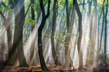 Waldfreude von Lars van de Goor