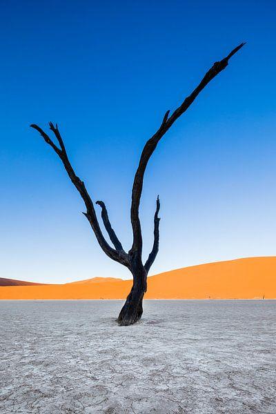 Versteende acaciaboom in Dodevlei / Deadvlei nabij de Sossusvlei, Namibië van Martijn Smeets