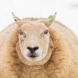 Sheep von Marijke van Eijkeren