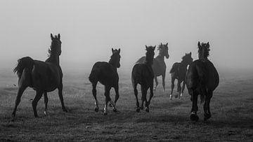Chevaux dans la brume sur