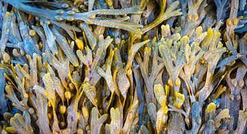 Zeegroente, eet smakelijk! van Rietje Bulthuis