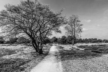 Gehweg auf dem Borkeld von Stedom Fotografie