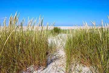 Dünen mit Strandhafer auf Schiermonnikoog von Jenco van Zalk