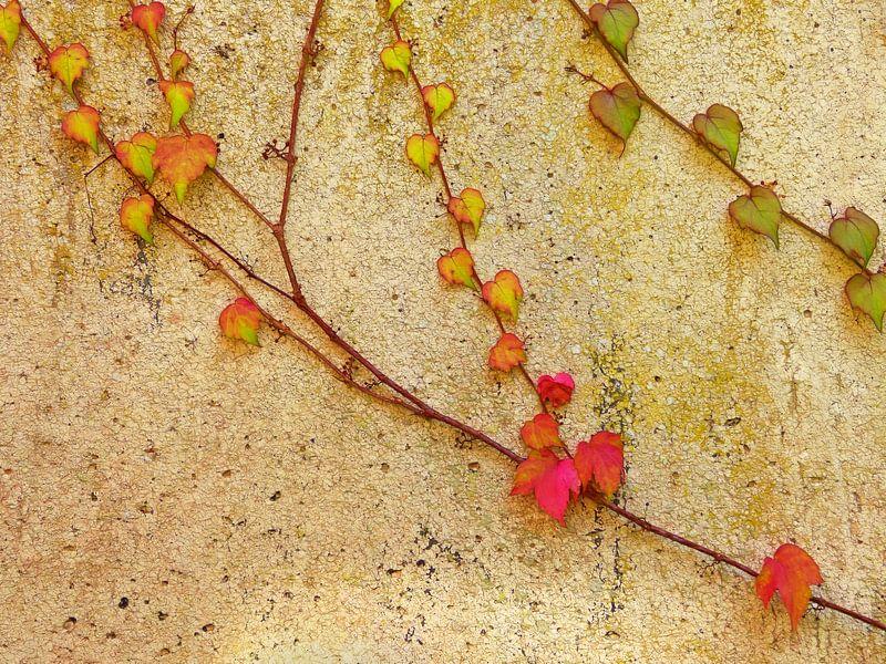 Living Wall (Klimplanten op muur) van Caroline Lichthart