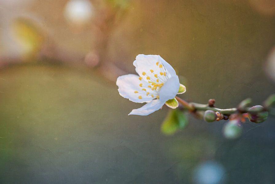 Verlangen naar zonlicht van Arja Schrijver Fotografie