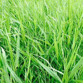 Green Grass von Wiljo van Essen