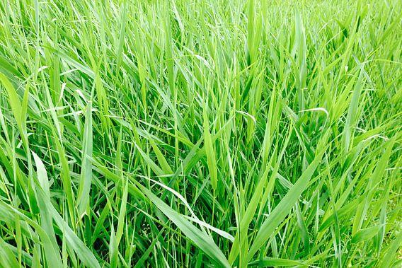 Groen als gras!