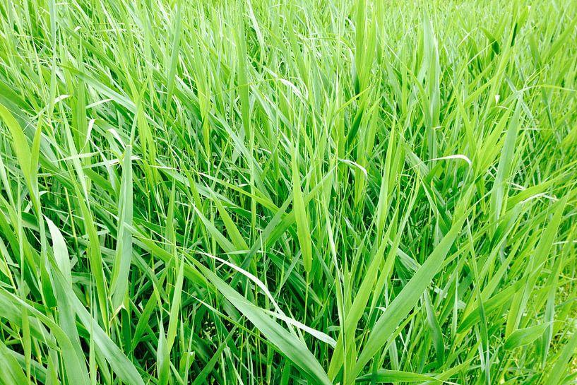 Groen als gras!  van Wiljo van Essen