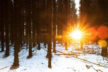 Zonsopkomst in besneeuwd bos (Nederland) van Marcel Kerdijk