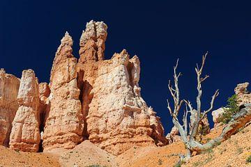 Im Bryce Canyon von Denis Feiner