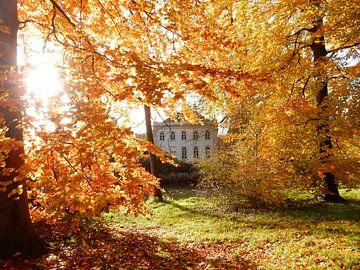 Zonlicht door hefstbladeren bij kasteel Landfort in Megchelen in de Achterhoek sur Joke te Grotenhuis