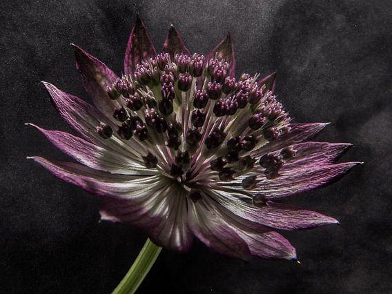 """Blume in """"dampfendem Licht"""""""