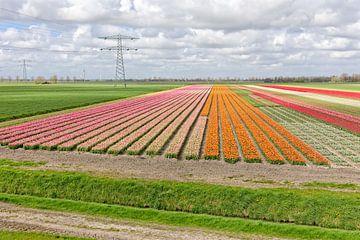 Farbpalette der Felder im Frühjahr von eric van der eijk
