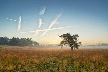 Misty Sonnenaufgang von Cor de Hamer
