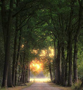 Goud aan t einde van de weg von Pieter Heymeijer