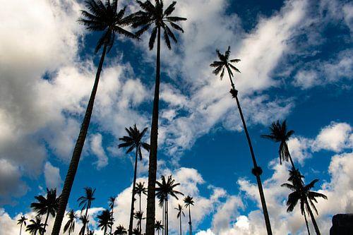 Palmbomen van Oscar Leemhuis