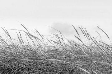 Dünengras von Kirsten Warner