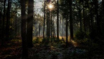 Im Wald von Bart Uijterlinde