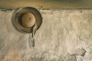 Sonnenhut auf alter Mauer von Ellen Driesse