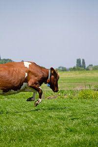 Springende koe von