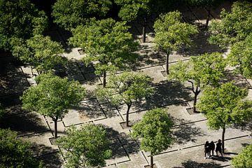 Symmetrie van bomen, Sevilla (Spanje) van Nick Hartemink