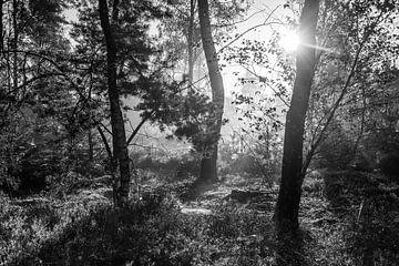 Opkomende zon in het bos in zwart wit von MICHEL WETTSTEIN