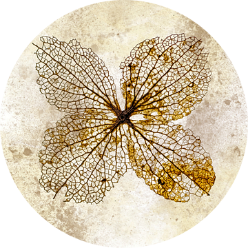 hortensia van Klaartje Majoor