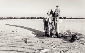 Tree trunk in Drunen Dunes