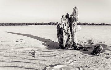 Tree trunk in Drunen Dunes sur Bas Wolfs