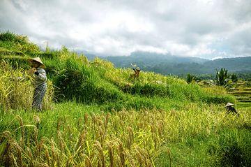 Oogsters in de rijstvelden van Jatiluwih van Joris Pannemans - Loris Photography