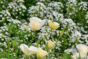 Wilde bloemenveld van J..M de Jong-Jansen
