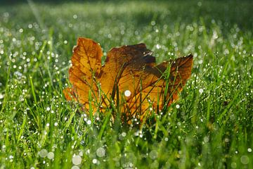 Herfstblad in gras von Michel van Kooten