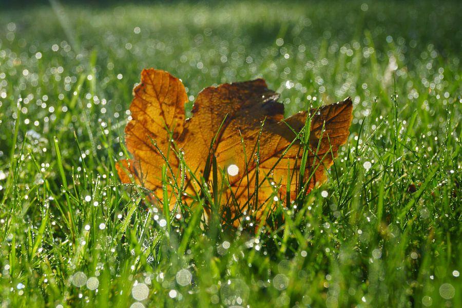 Herfstblad in gras